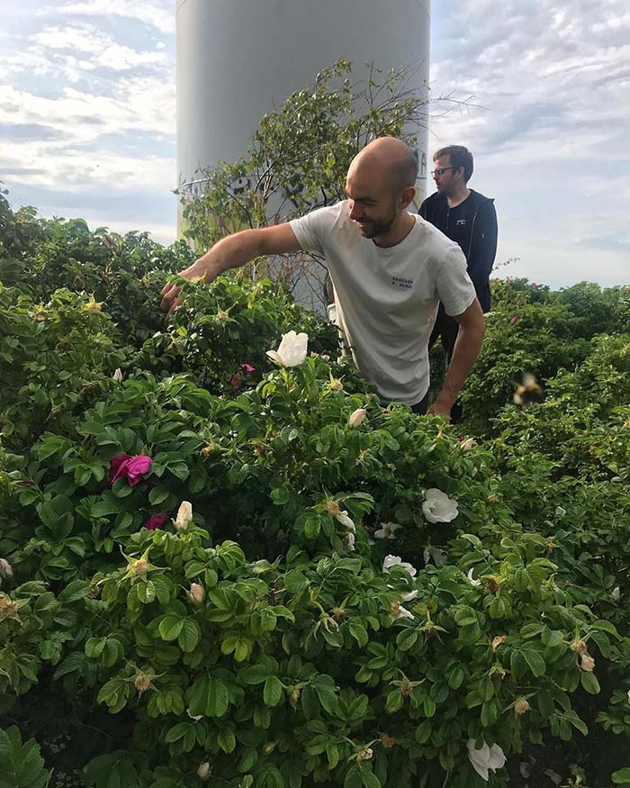 The team foraging for wild rose petals to be added to gose, Inoculate