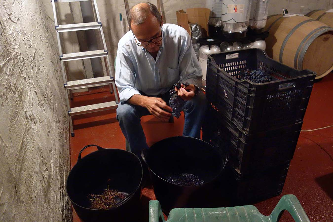 Hugo's dad helping with the winemaking